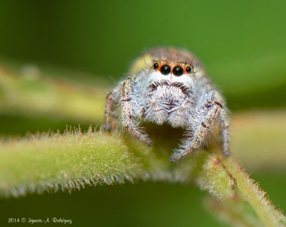 spider-140419-IAR_1490_III_A.jpg