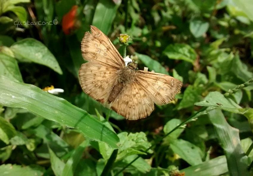 Butterflyspp.jpg