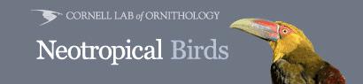 neotropicalbirds.jpg