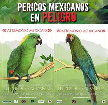 pericos_enpeligro.jpg